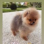Giulia de lellis cane